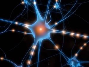 neurone2